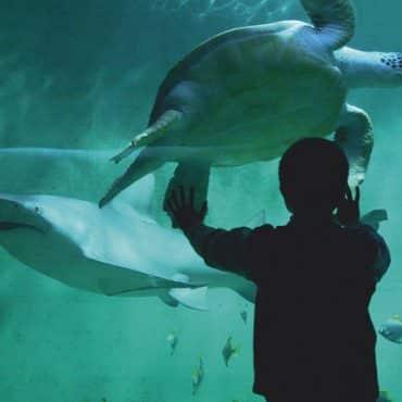 Aquarium de Bretagne