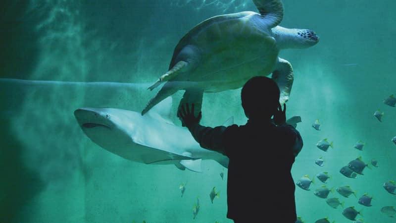 Le Grand-Aquarium ( Bretagne)